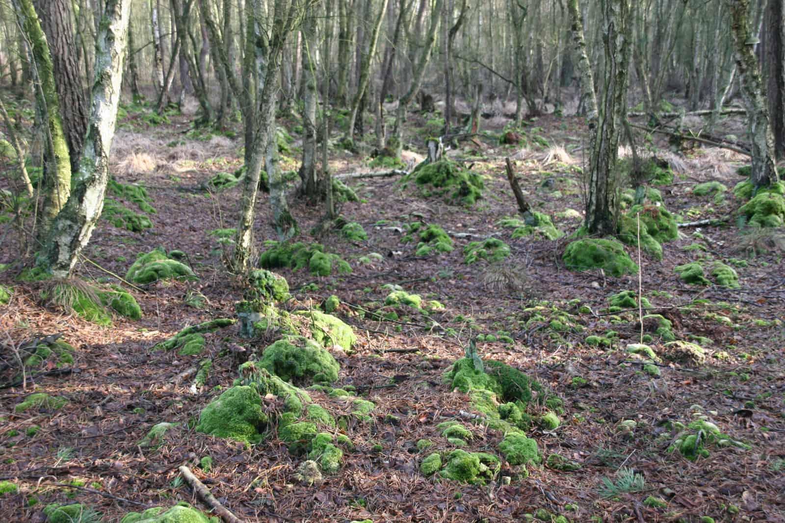Trockenheit im Tessiner Moor. Foto: Gerd Schriefer